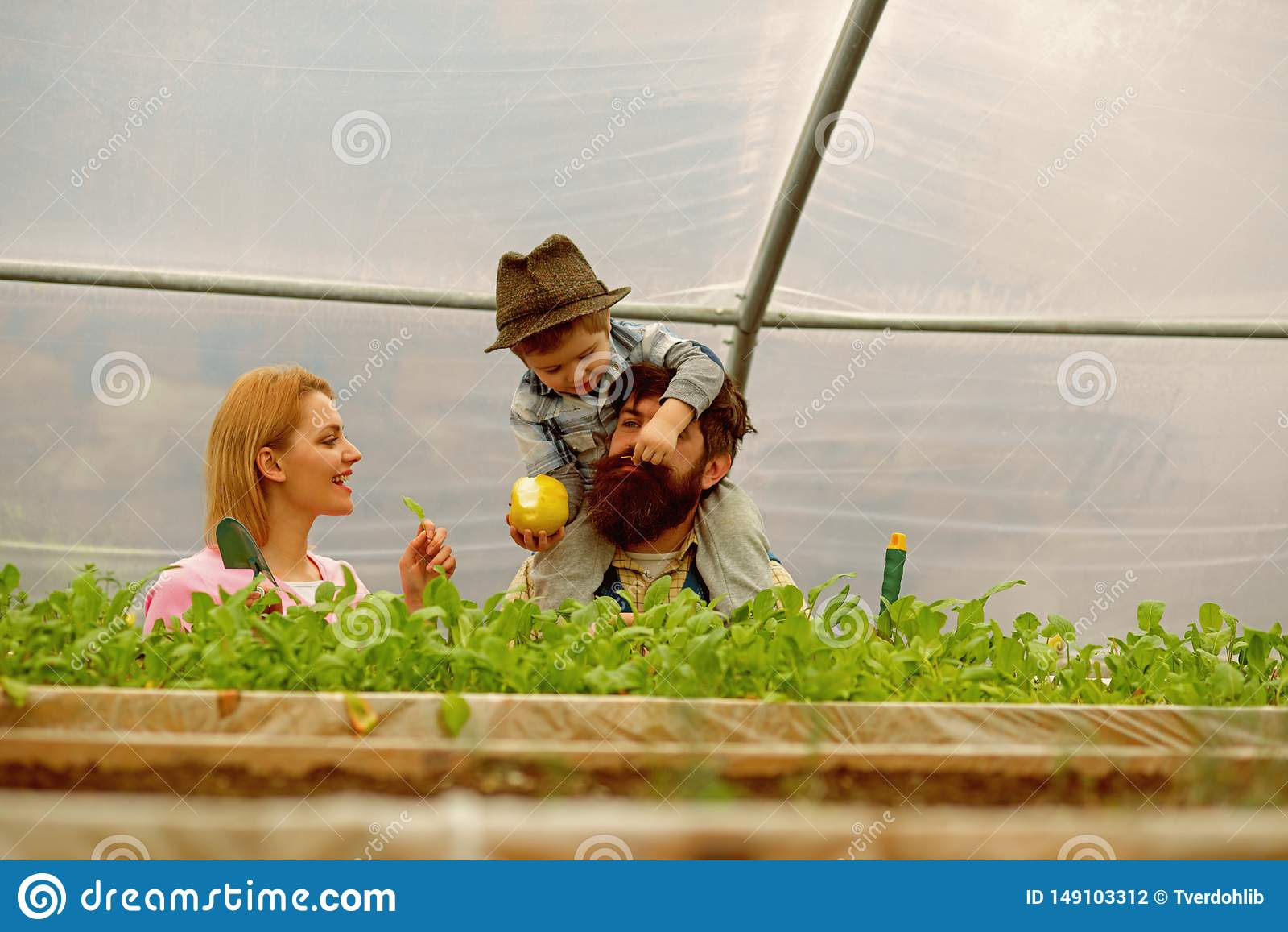 父亲母亲和儿子自温室 有母亲和父亲工作的儿子自温室 母亲父亲和儿子自温室
