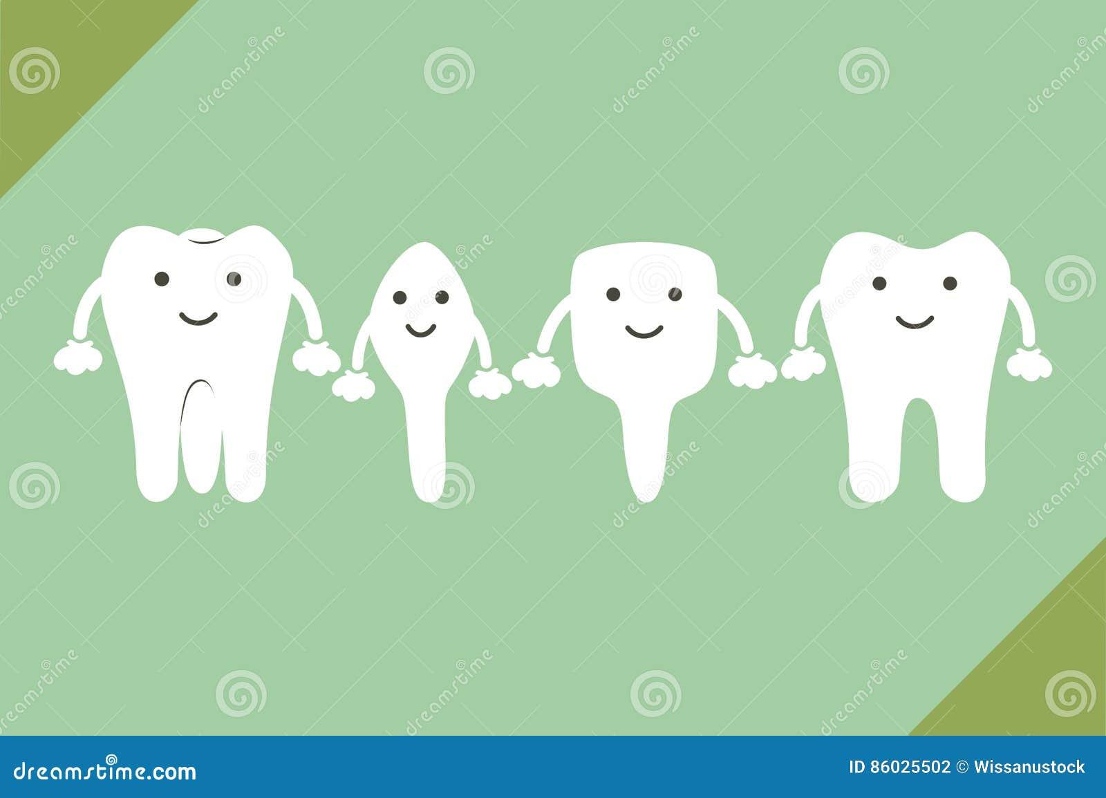 牙类型-门牙,犬,前臼齿,槽牙