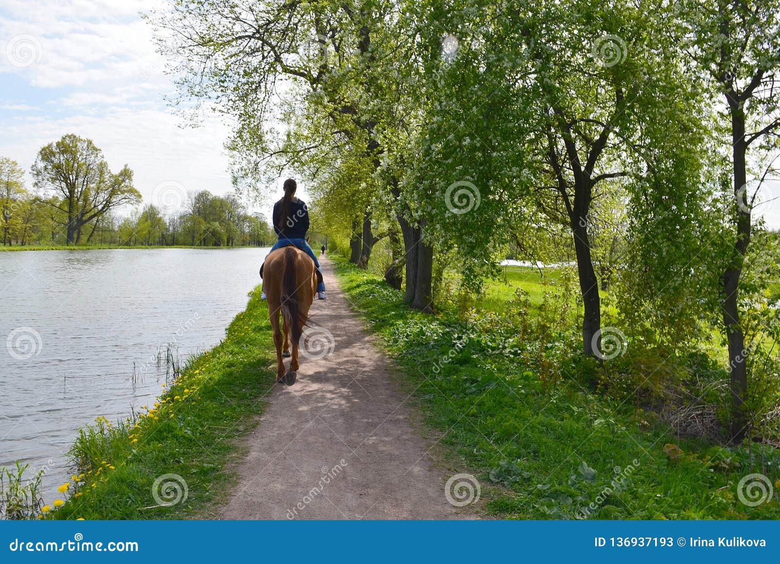 牛仔裤和蓝色有冠乌鸦的一名年轻深色的妇女由湖在树荫下骑沿道路的一匹海湾马树 回到视图