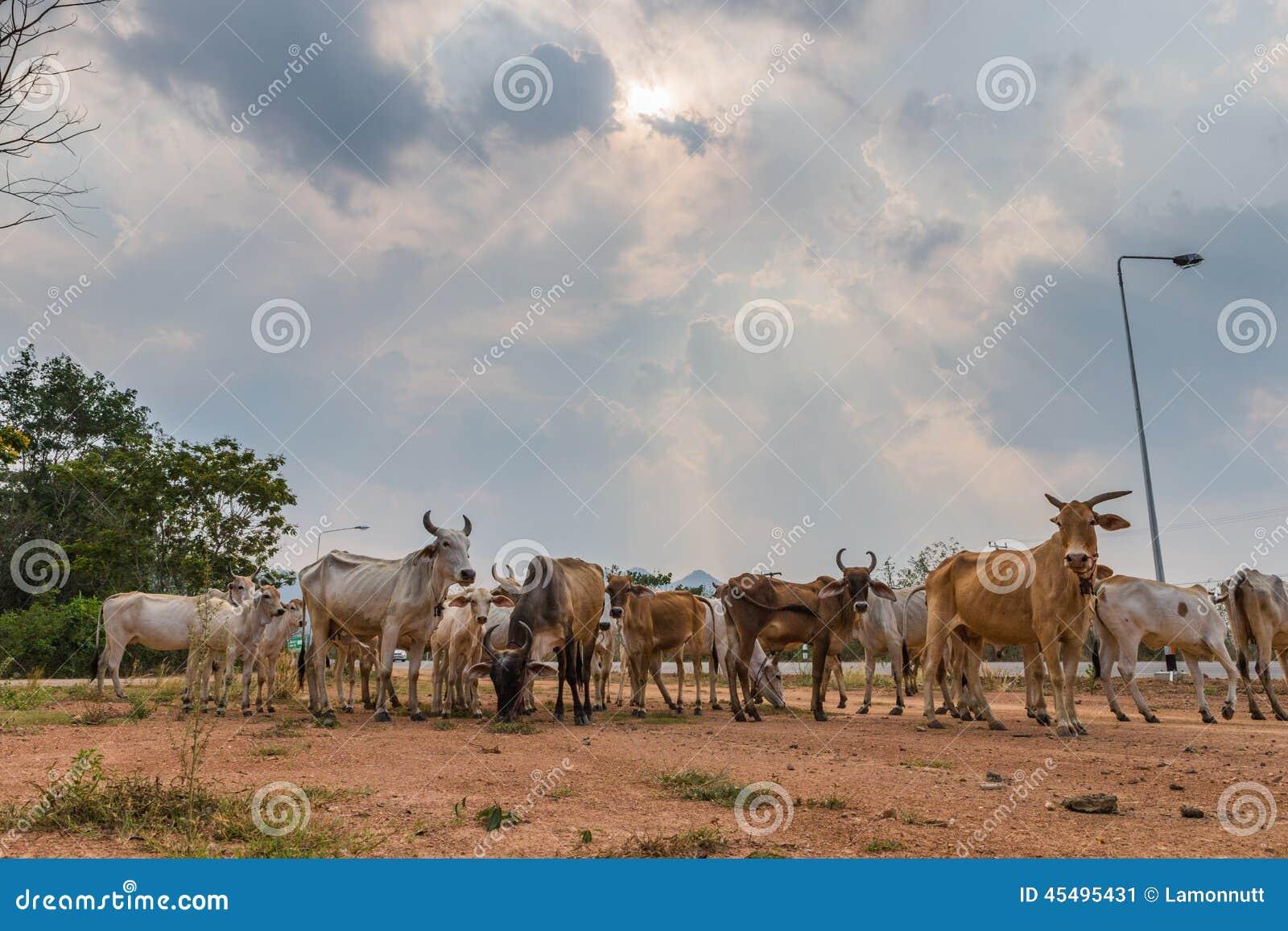 牧群在乡下