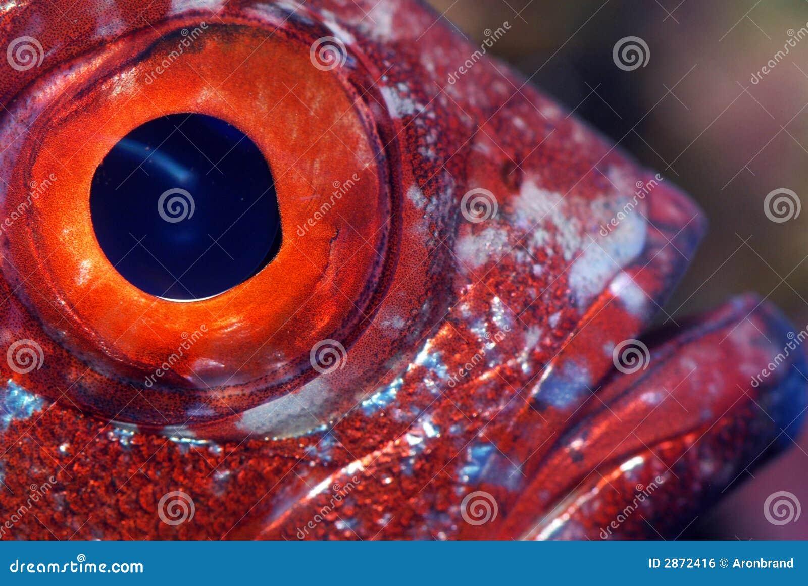 特写镜头眼睛鱼