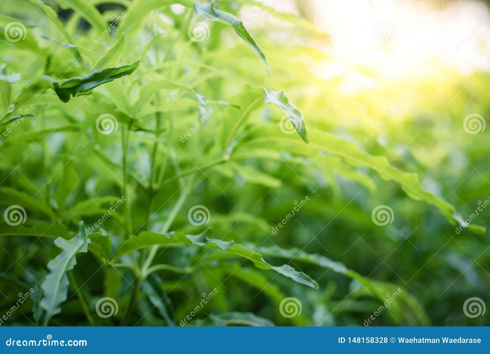 特写镜头绿色叶子自然视图在被弄脏的绿叶的