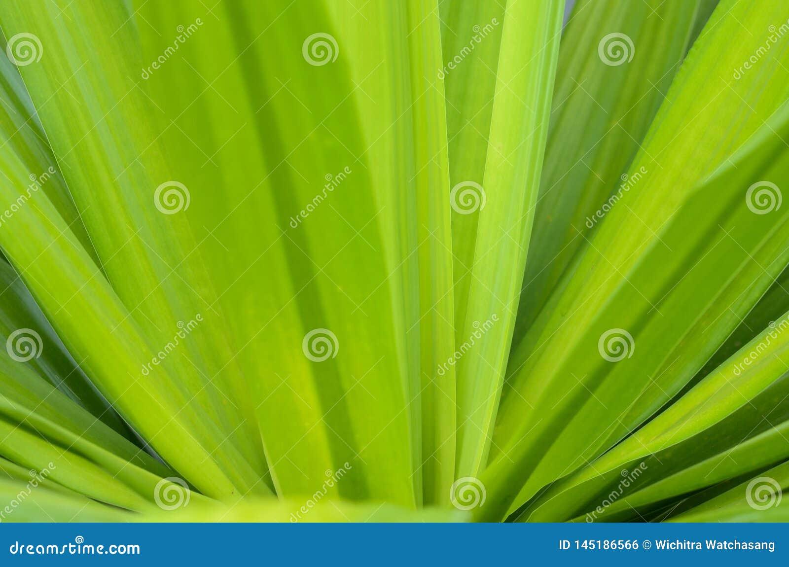 特写镜头自然视图和绿色叶子抽象Bokeh在被弄脏的绿色背景的与文本的拷贝空间