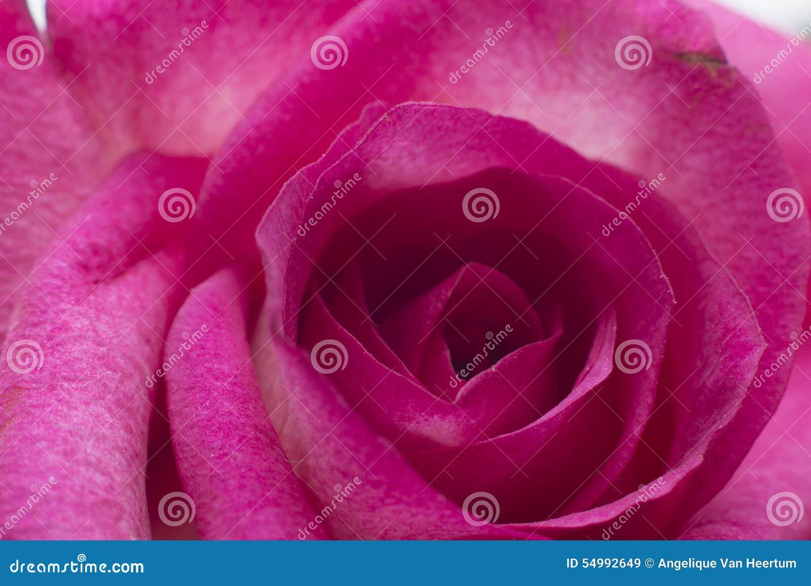 特写镜头粉红色上升了