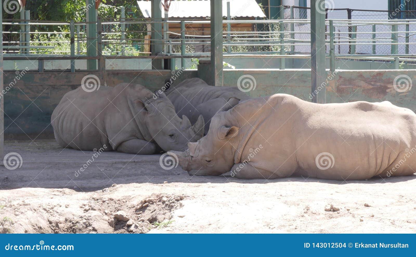 犀牛在动物园里