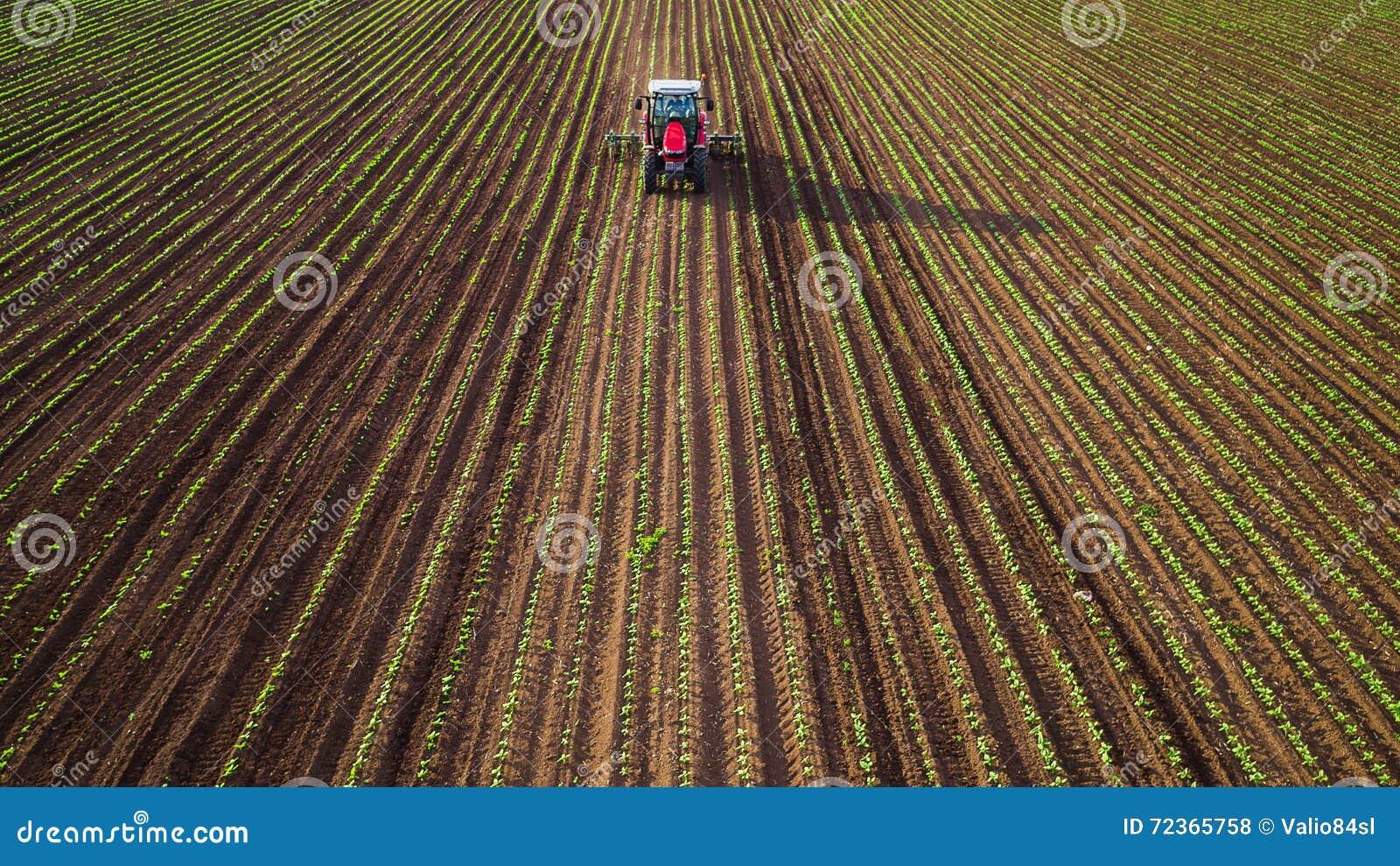 犁和喷洒在麦田的农用拖拉机