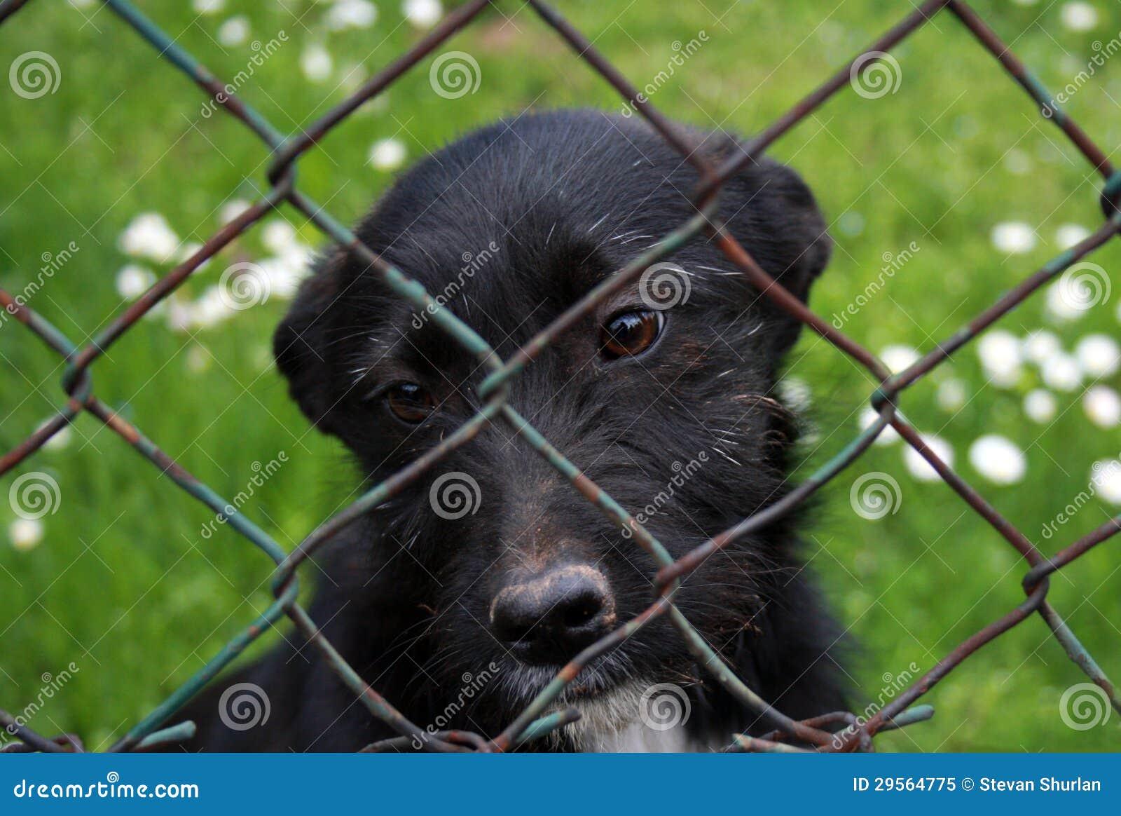 犬拘留所小狗