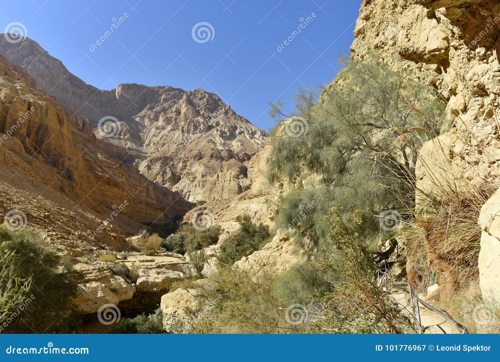 犹太沙漠风景