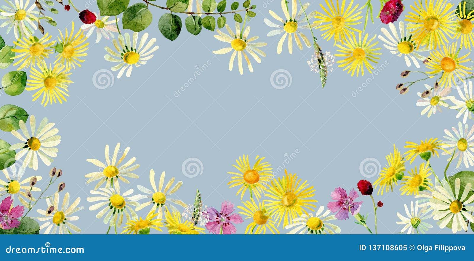 狂放的水彩野花长方形框架