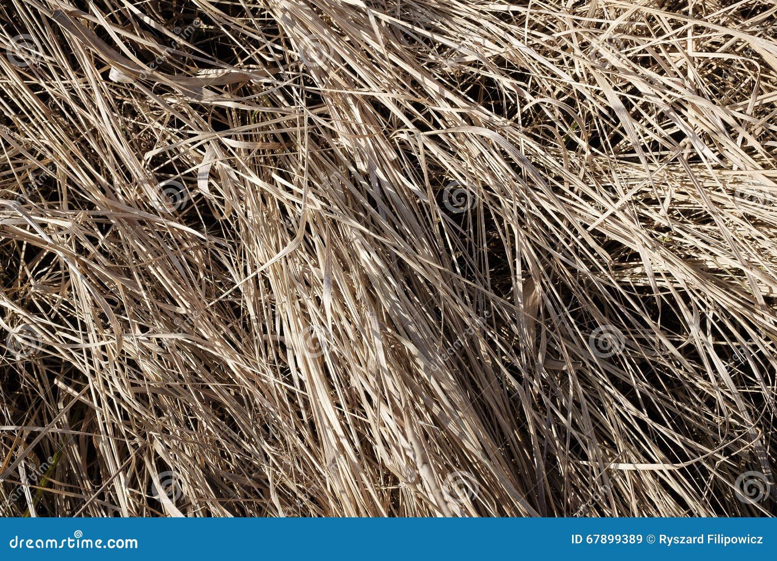狂放,干燥洗刷在草甸 宏观看法