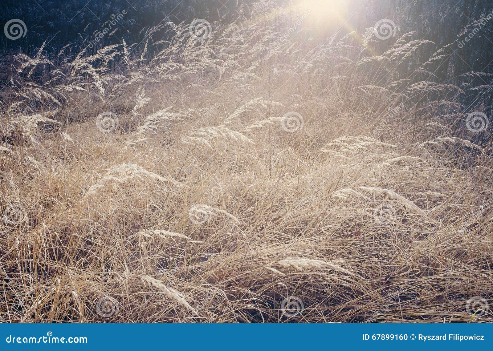 狂放,干燥洗刷在草甸