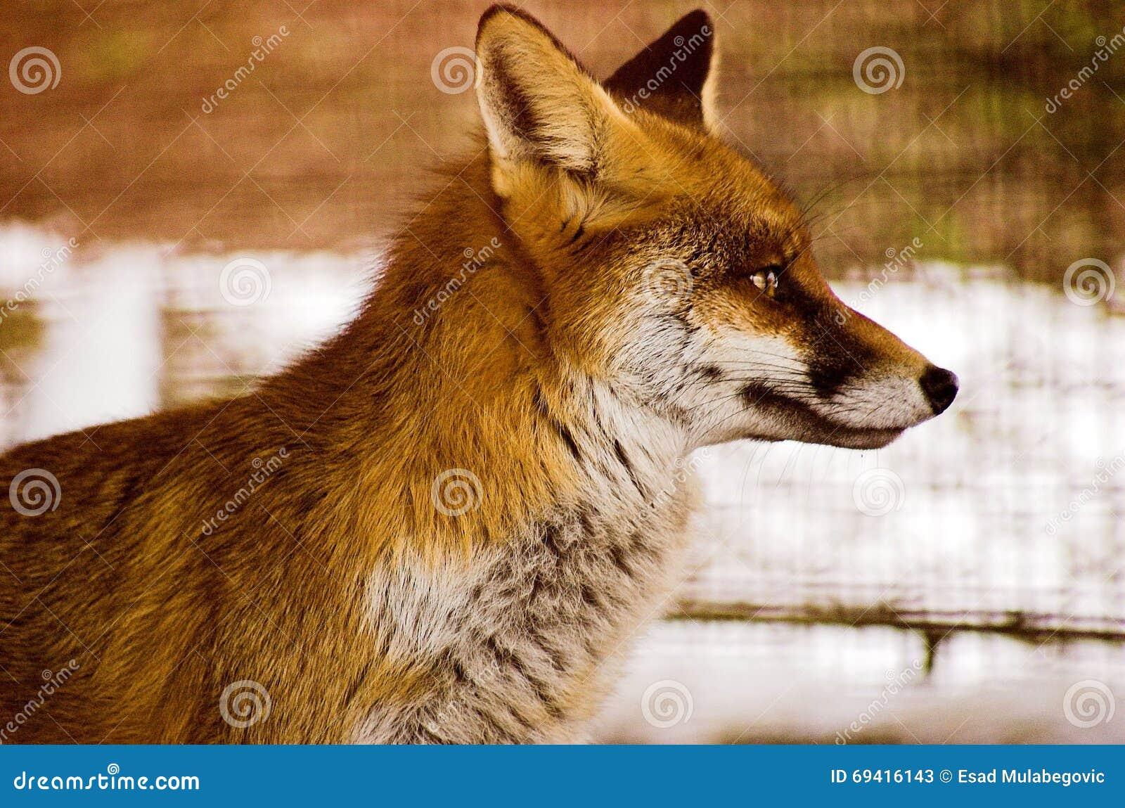 狐狸��h����j˞j���_狐狸