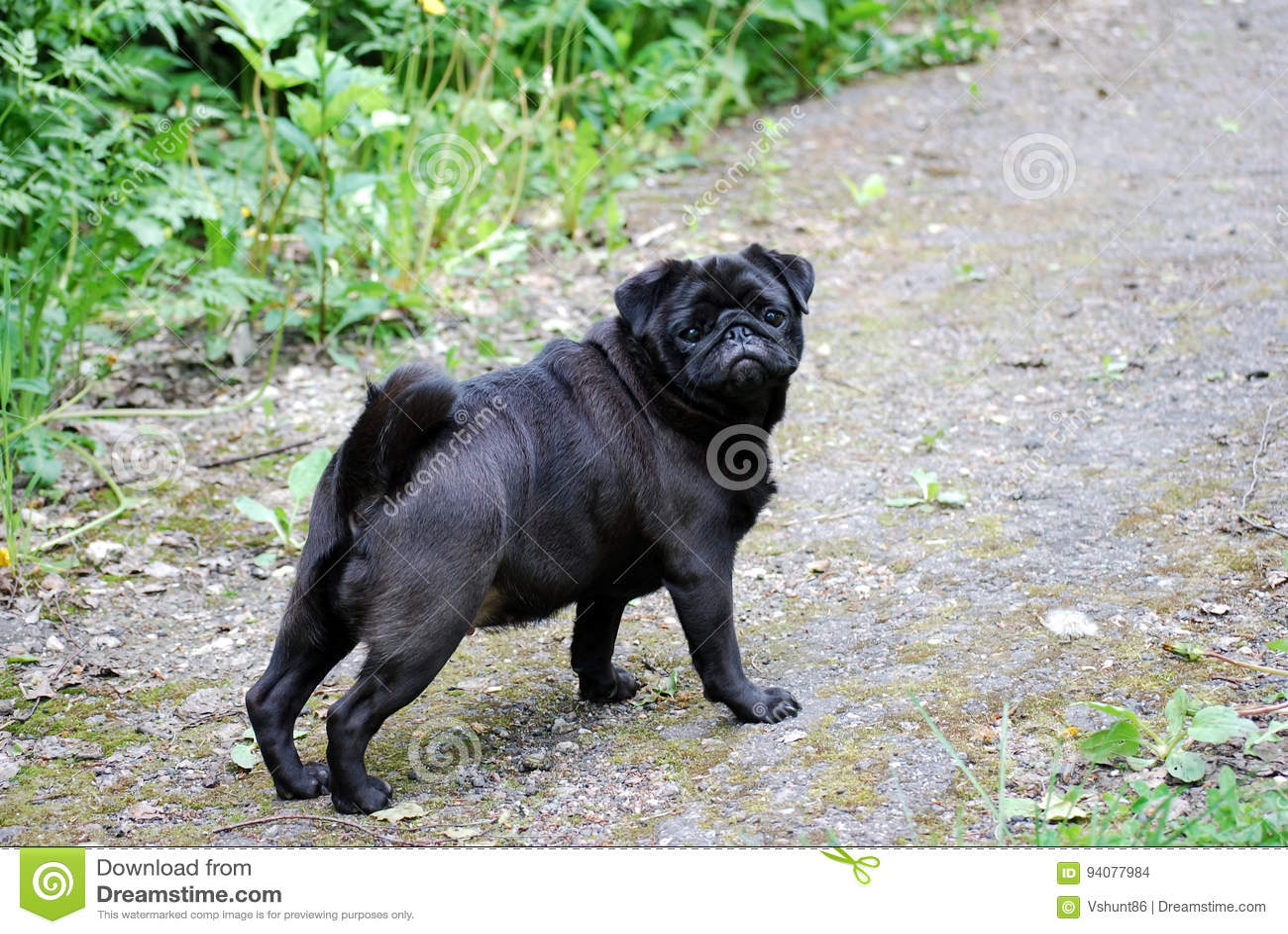 狗一个今后逃脱黑哈巴狗的神色  她看所有者