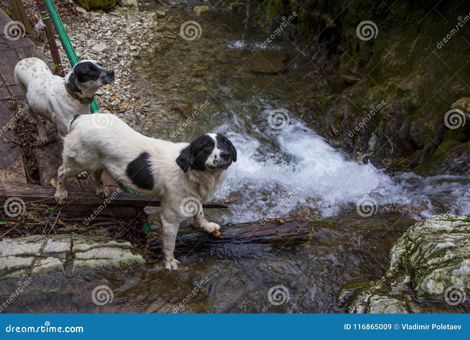 狗二 瀑布和山河 俄国 索契