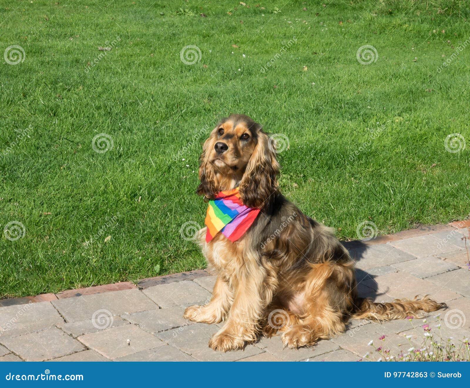 狗佩带的自豪感彩虹围巾