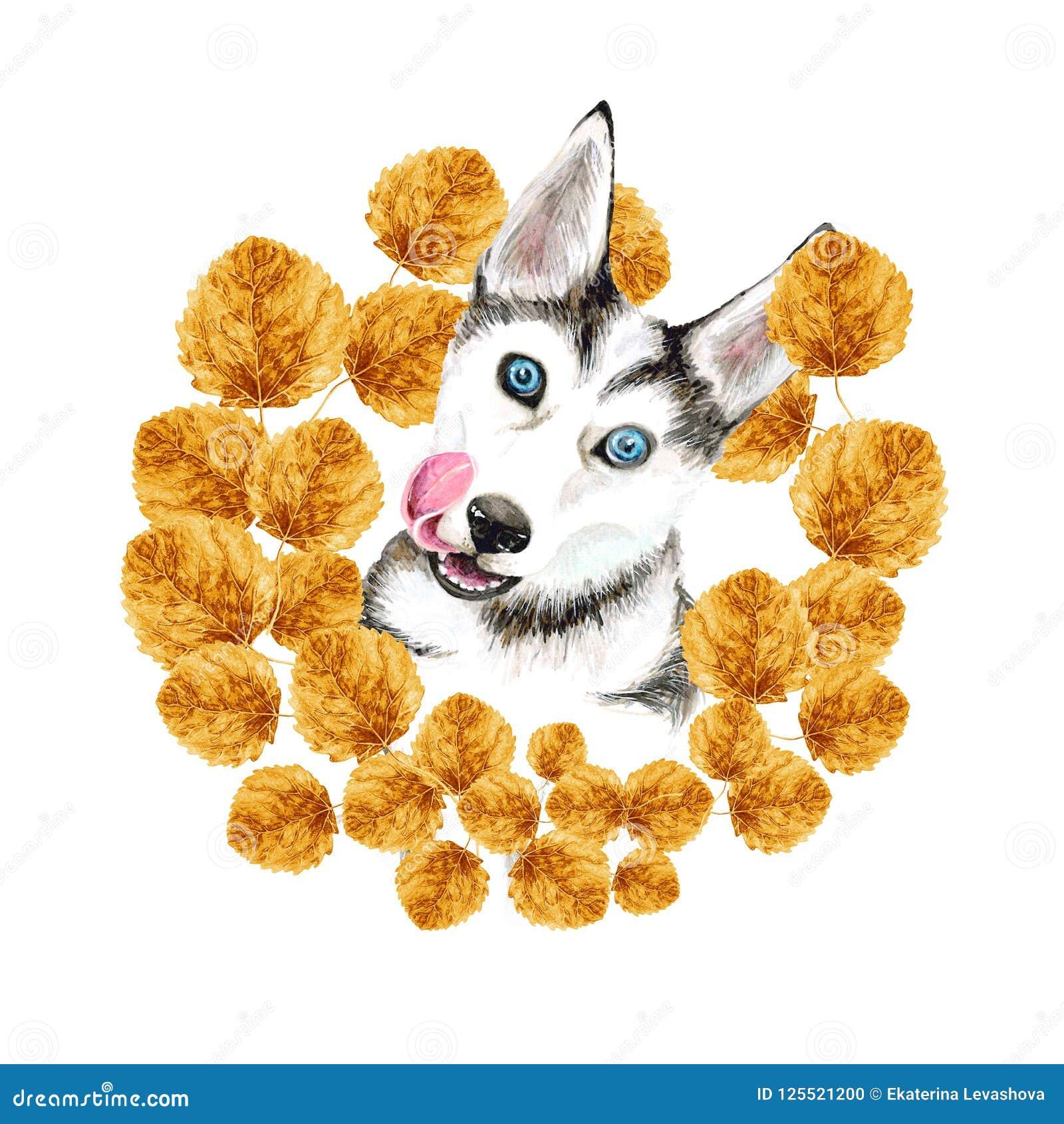 狗养殖爱斯基摩 与蓝眼睛的逗人喜爱的小狗 秋天 在金黄黄色叶子花圈  画象