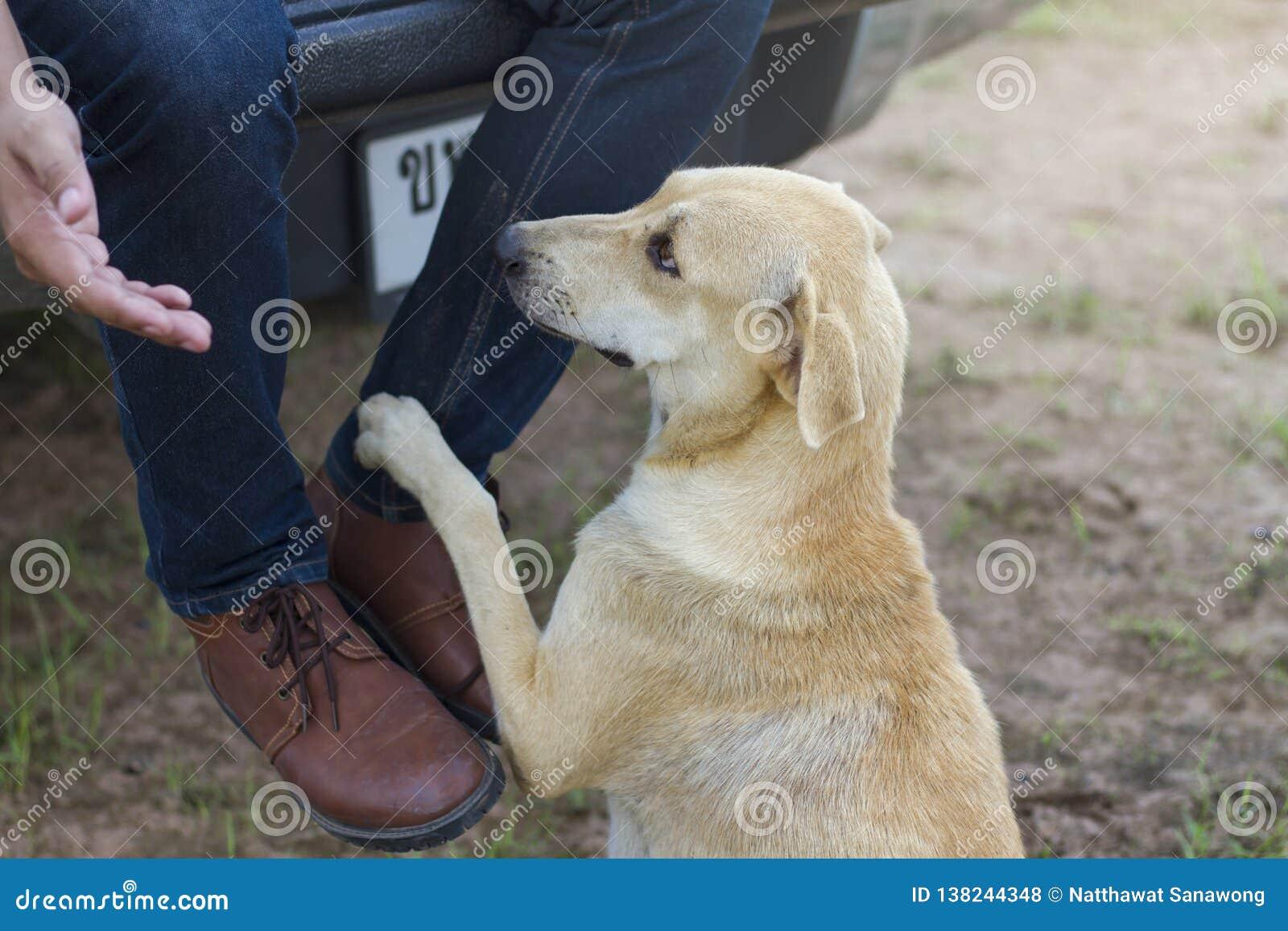 狗到达他的脚接触他的脚