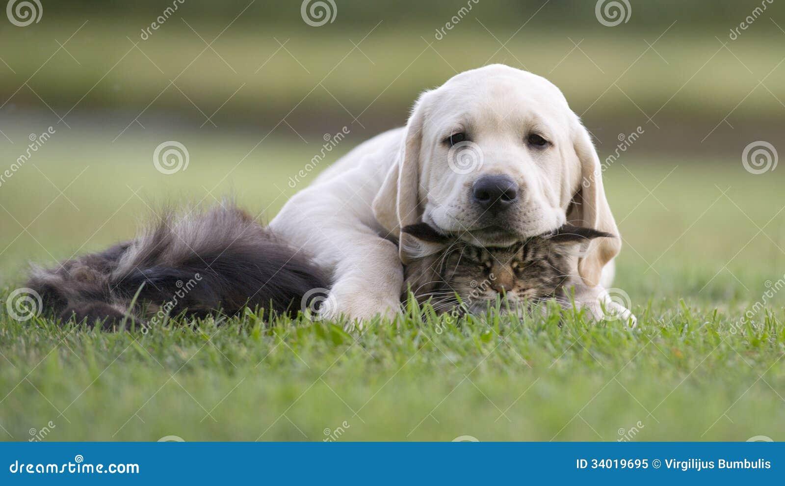 狗和猫友谊
