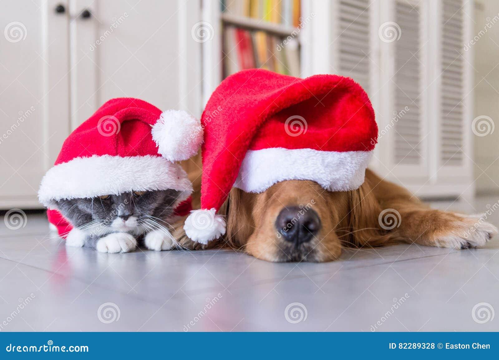 戴狗和猫圣诞节帽子