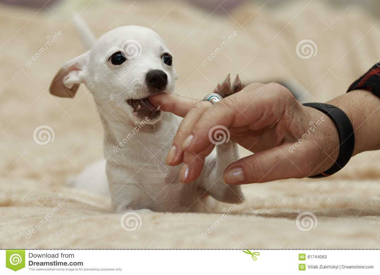 狗嚼一个手指
