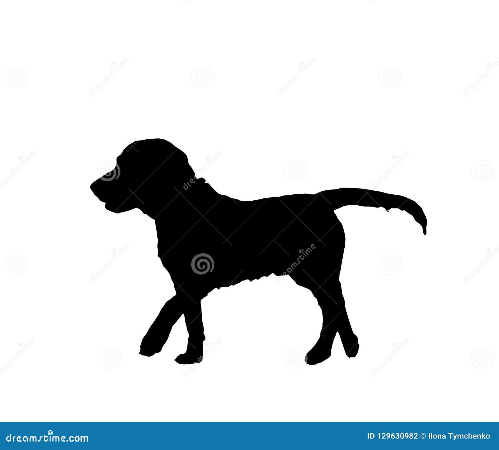 狗在白色背景隔绝的黑色剪影,传染媒介eps 10