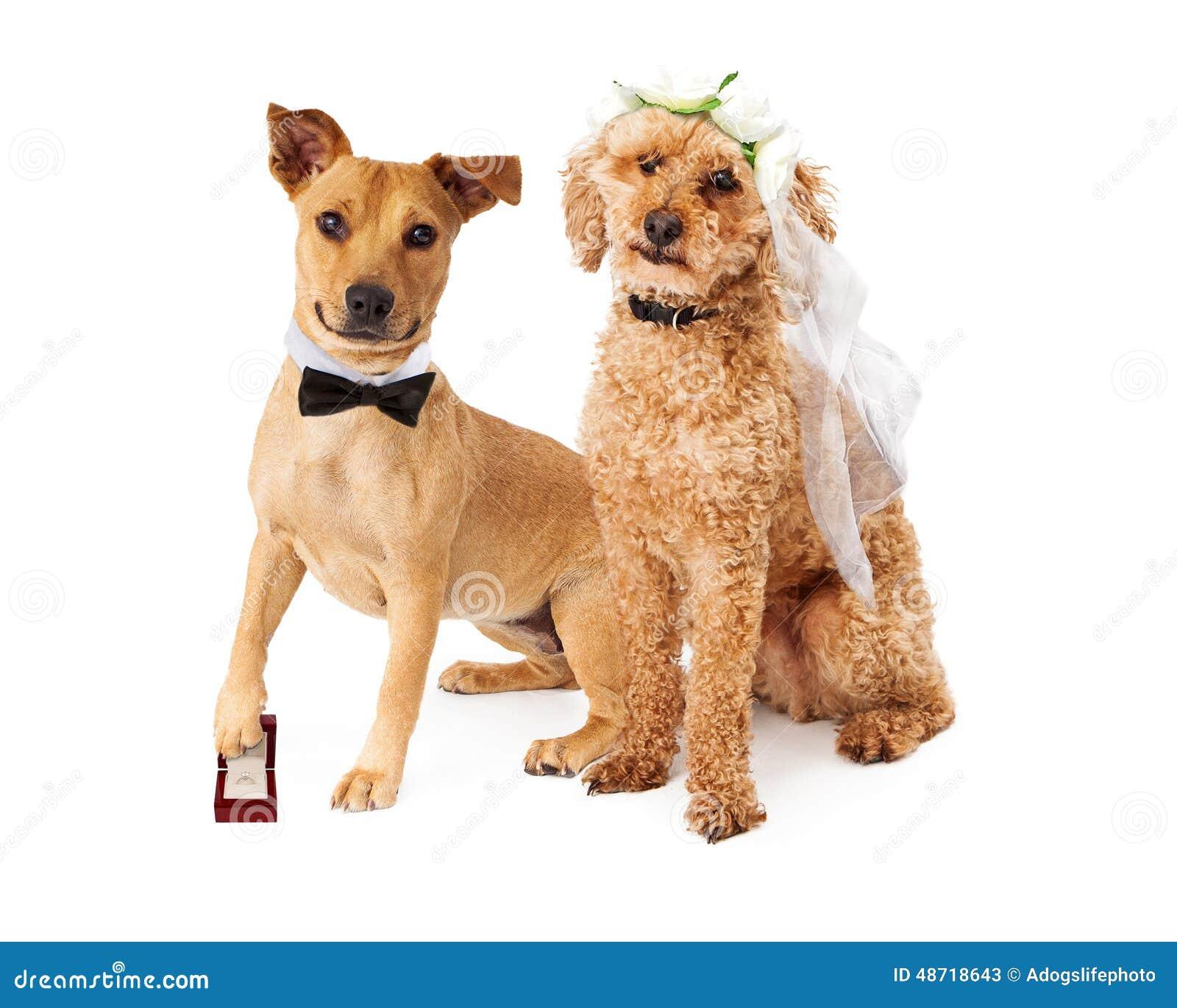 孕和狗干电影_狗婚礼新娘和新郎
