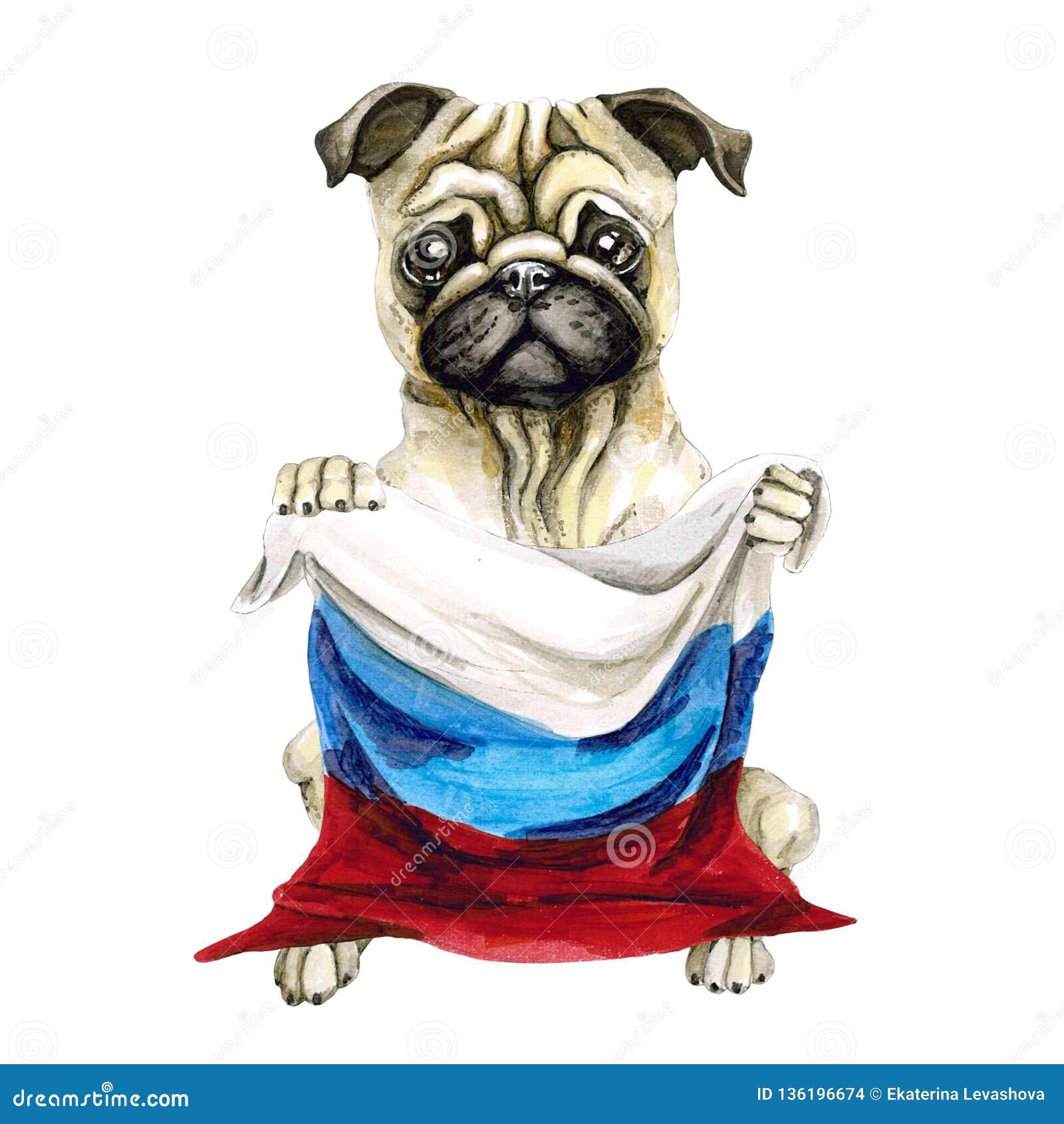 狗拿着俄国旗子的品种哈巴狗 背景查出的白色 政治 小狗