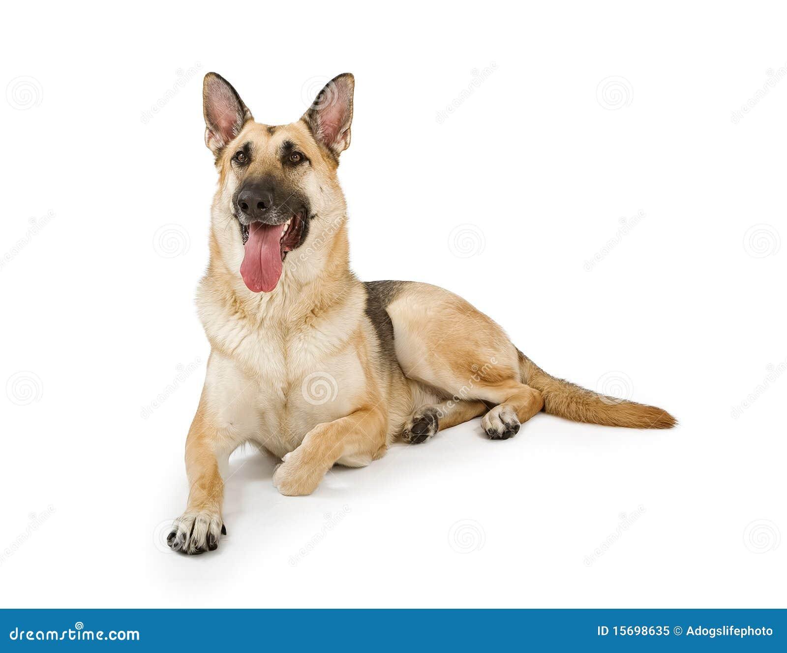 狗查出的白色