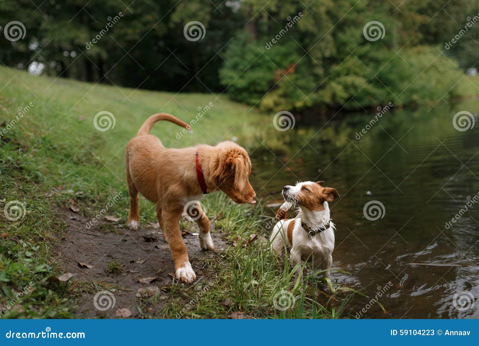 狗爱和拥抱