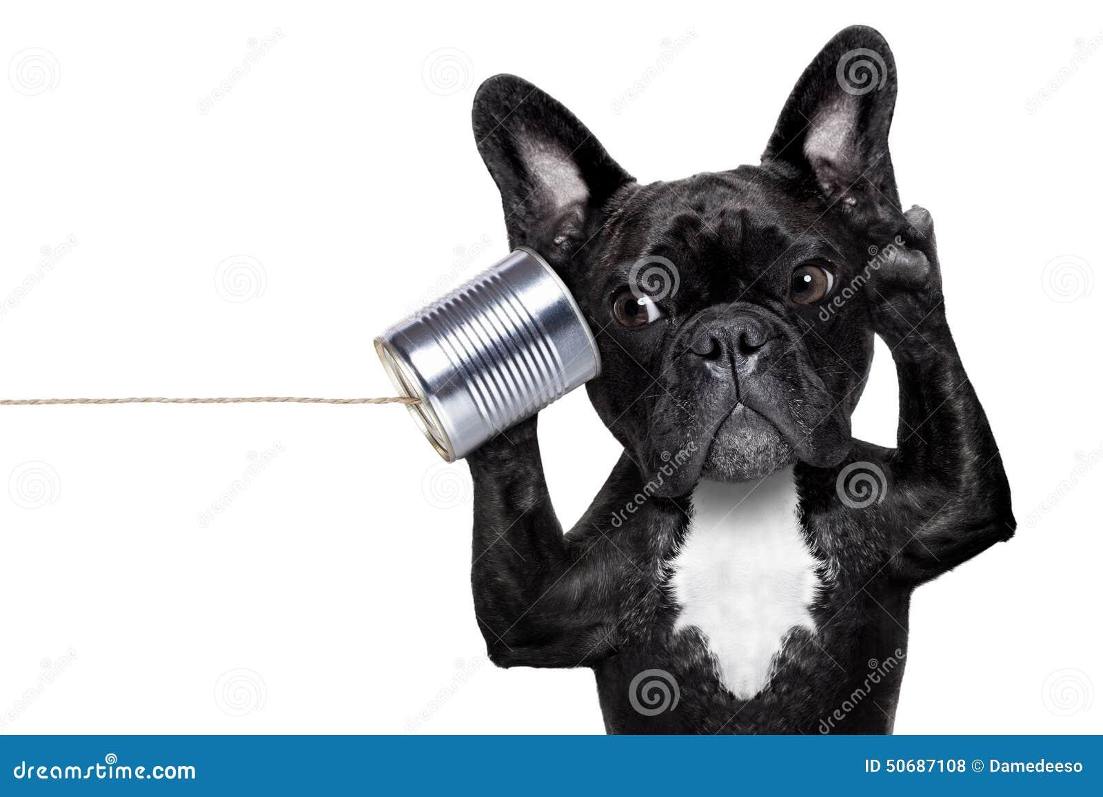 Download 狗电话telpehone 库存照片. 图片 包括有 宠物, 闲话, 查出, 敌意, 牛头犬, 声明, 求知欲 - 50687108