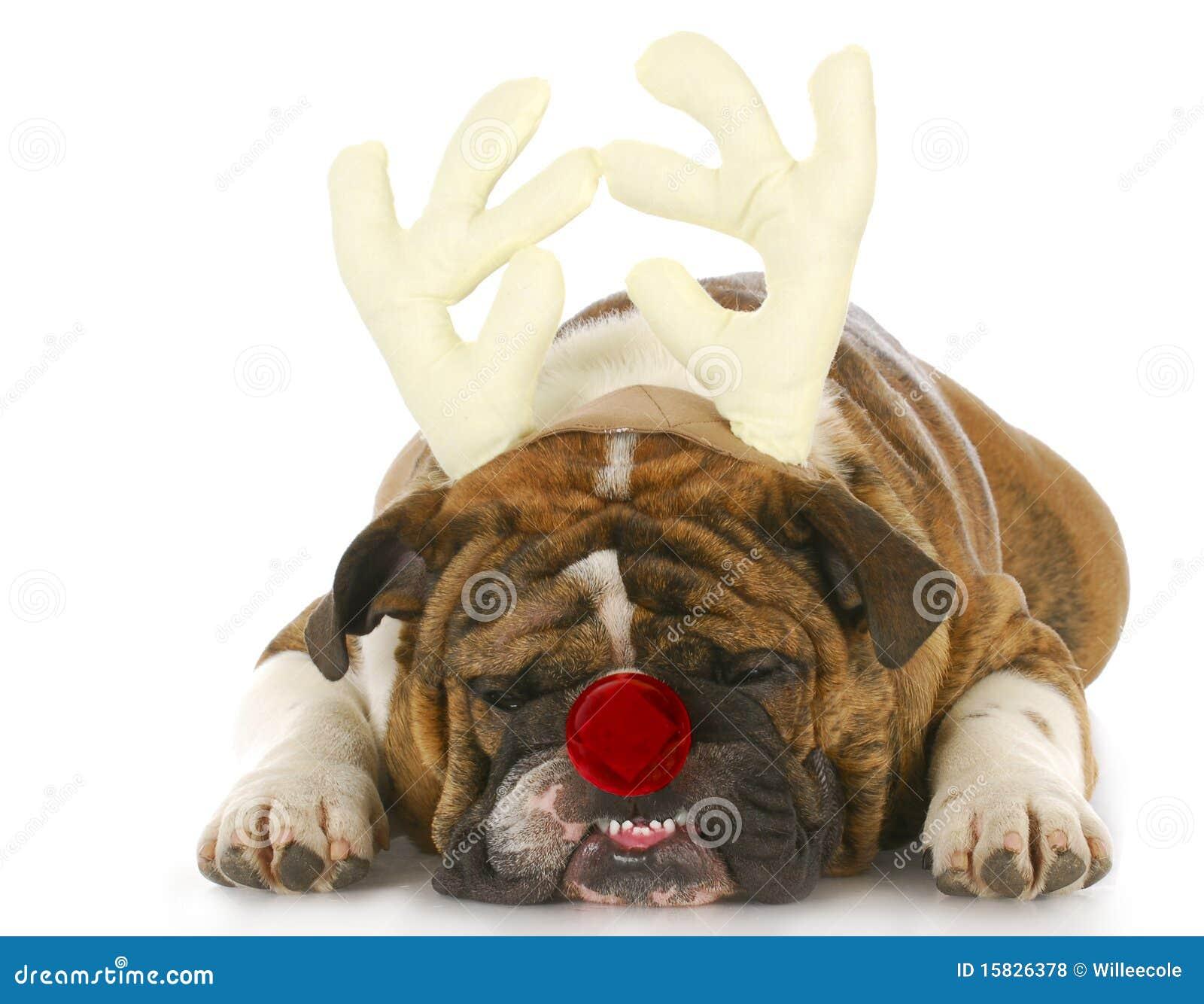 狗装饰了象鲁道夫
