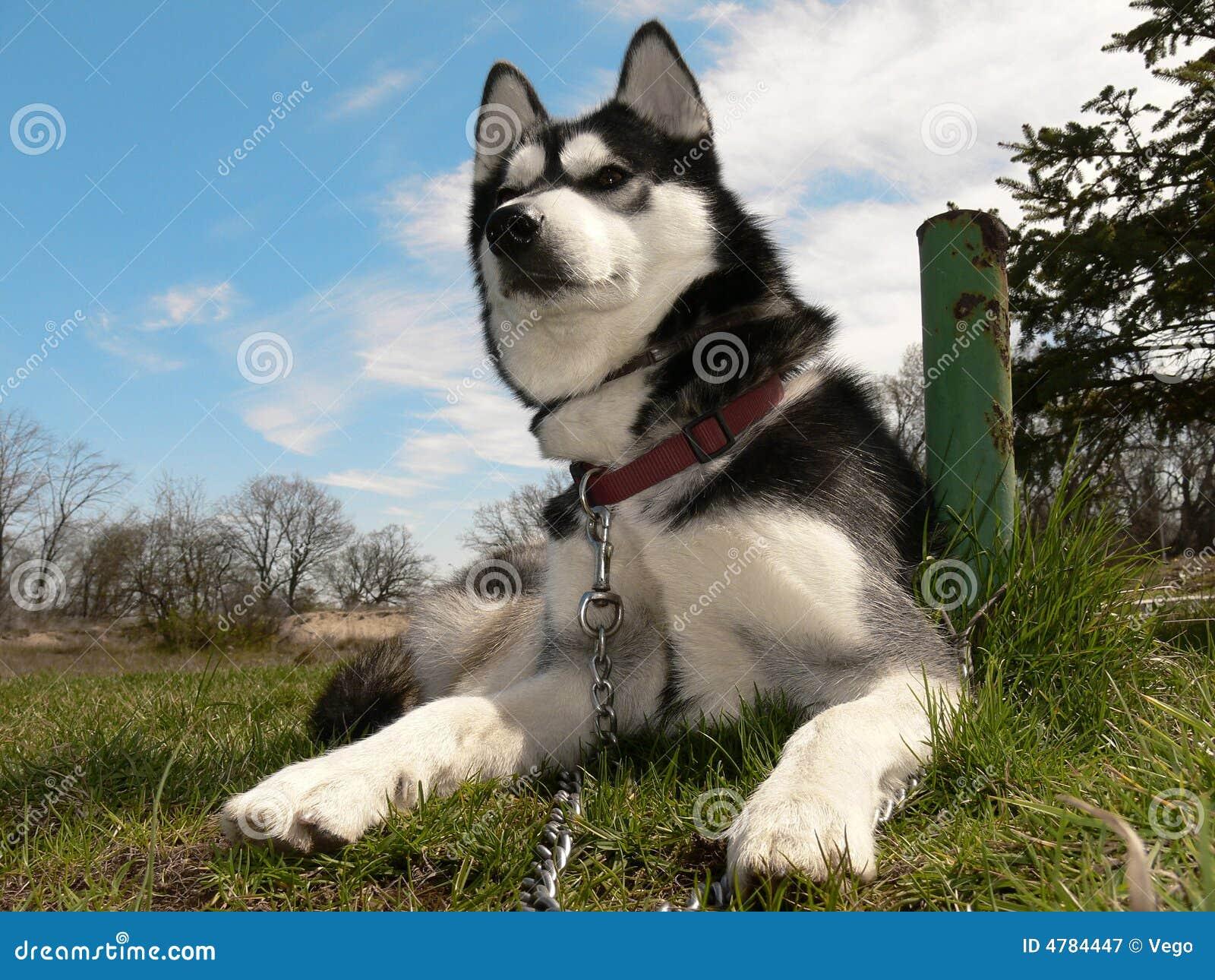 人与动物之骚婆娘与狗_壁纸 动物 狗 狗狗 1300_1065