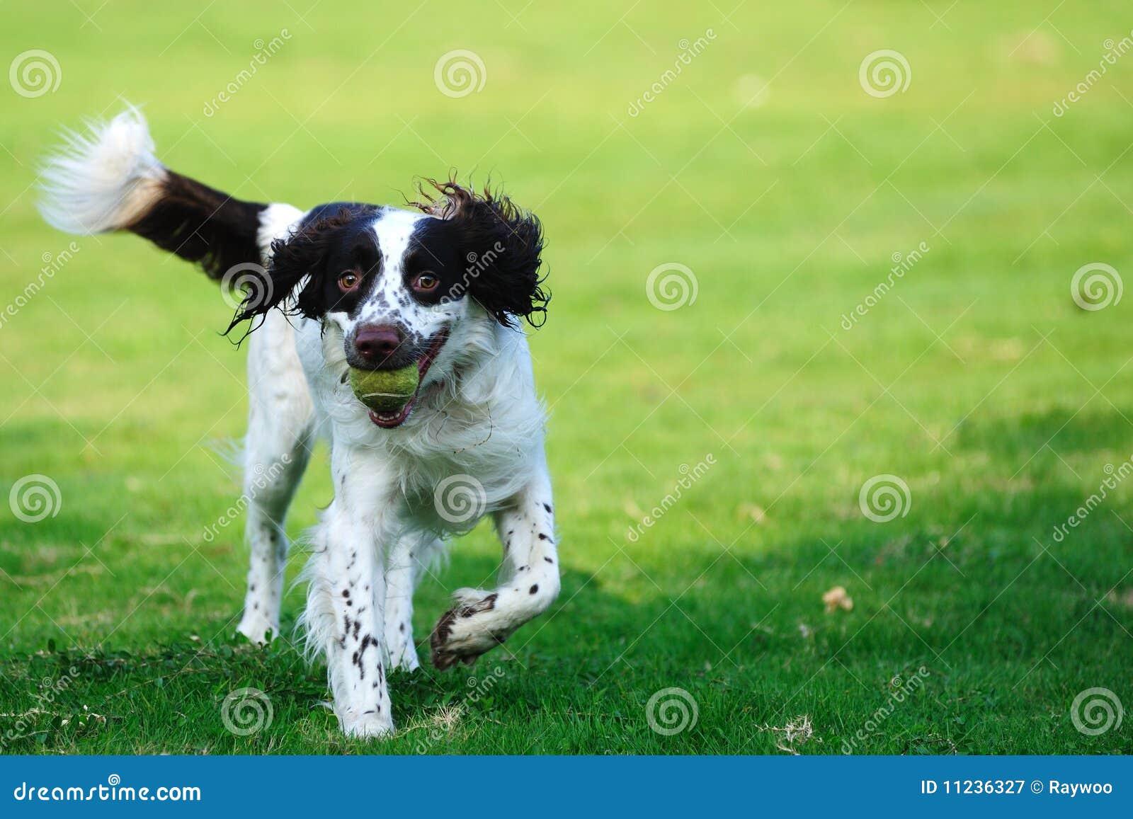 狗和人�y�'��)�al�����:)�h�_狗连续蹦跳的人