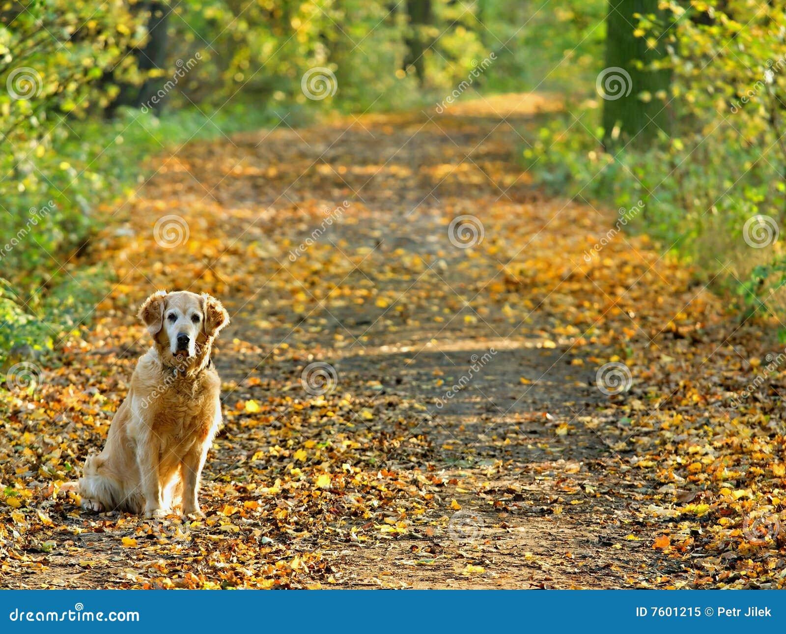狗金公园猎犬结构