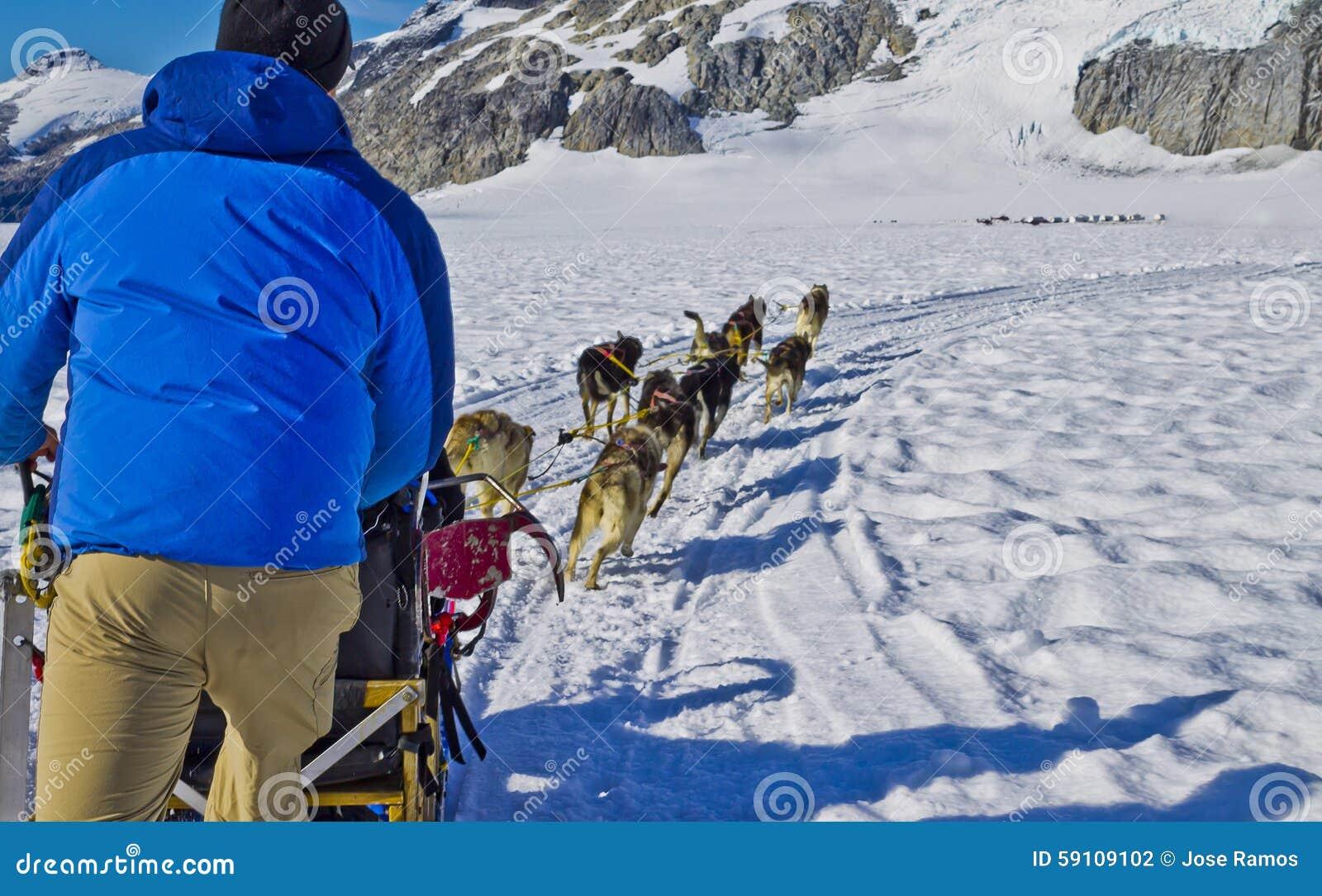 狗雪撬队训练