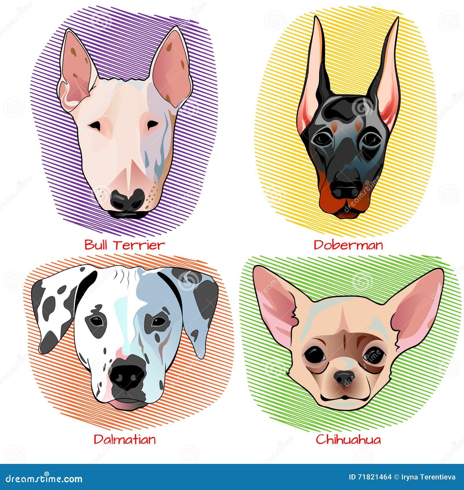 狗画象集合平的设计