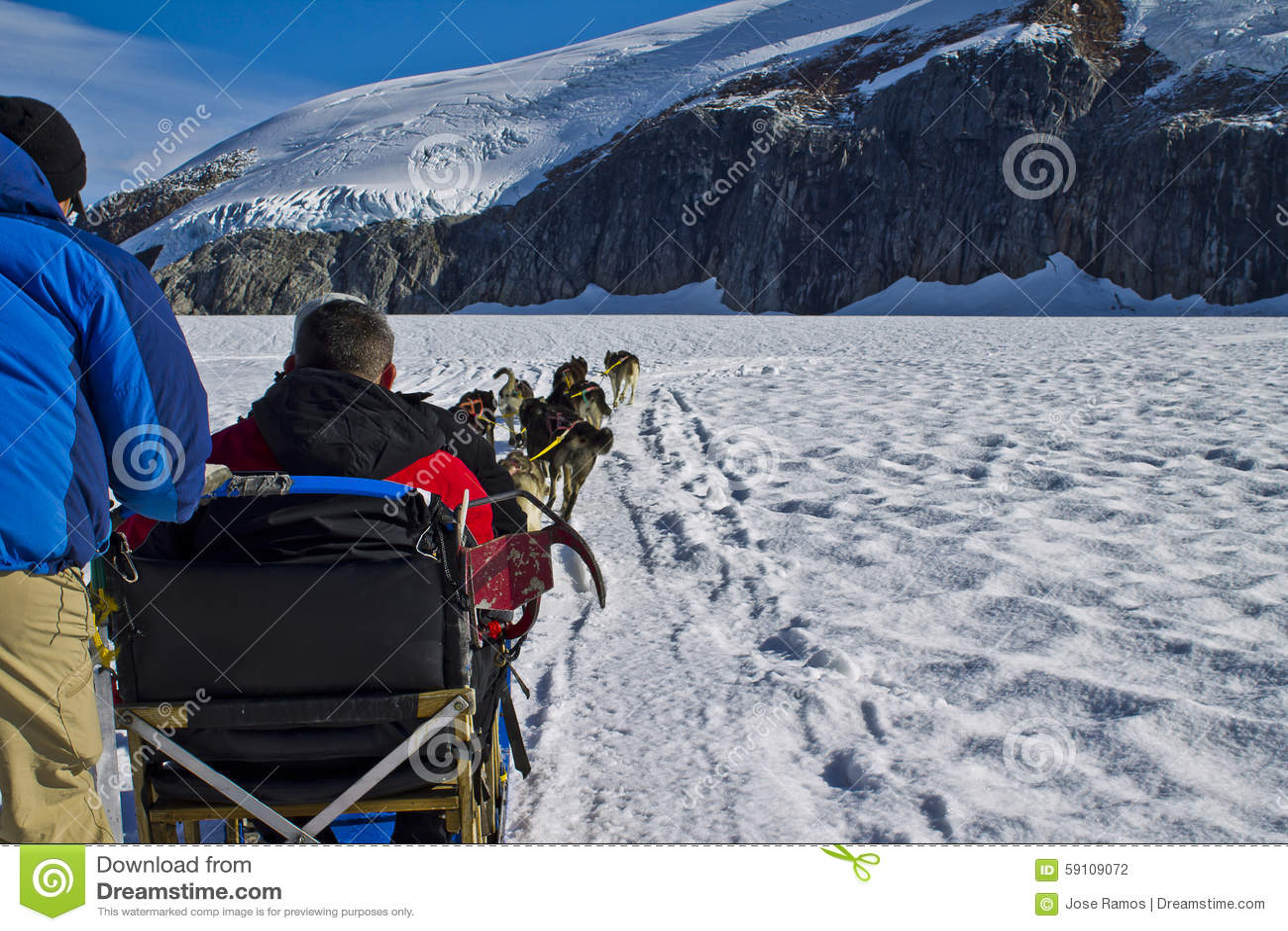 狗runing雪撬的队