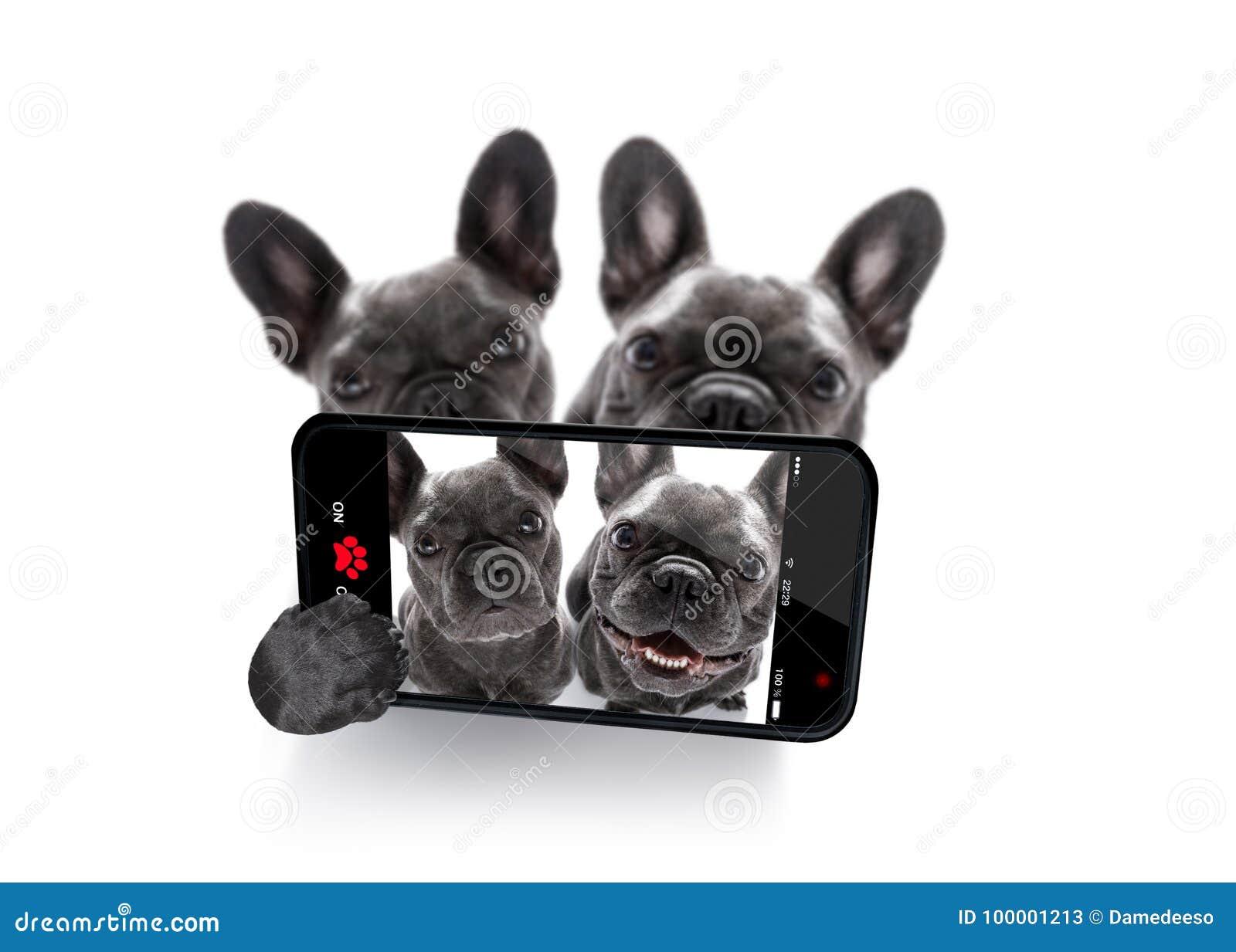 狗selfie夫妇