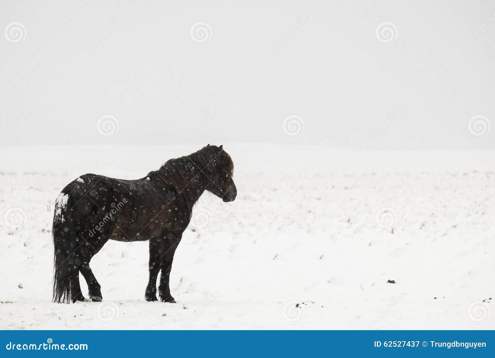 独奏黑冰岛的马