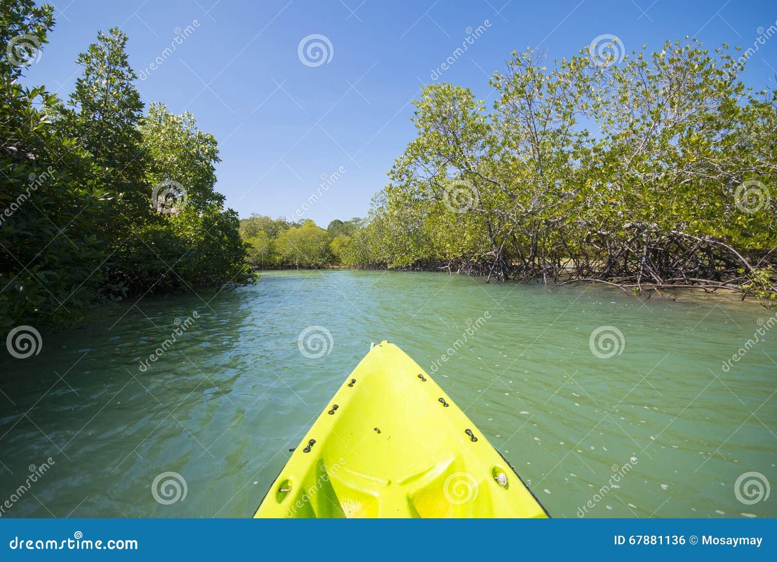 从独木舟的美洲红树景色