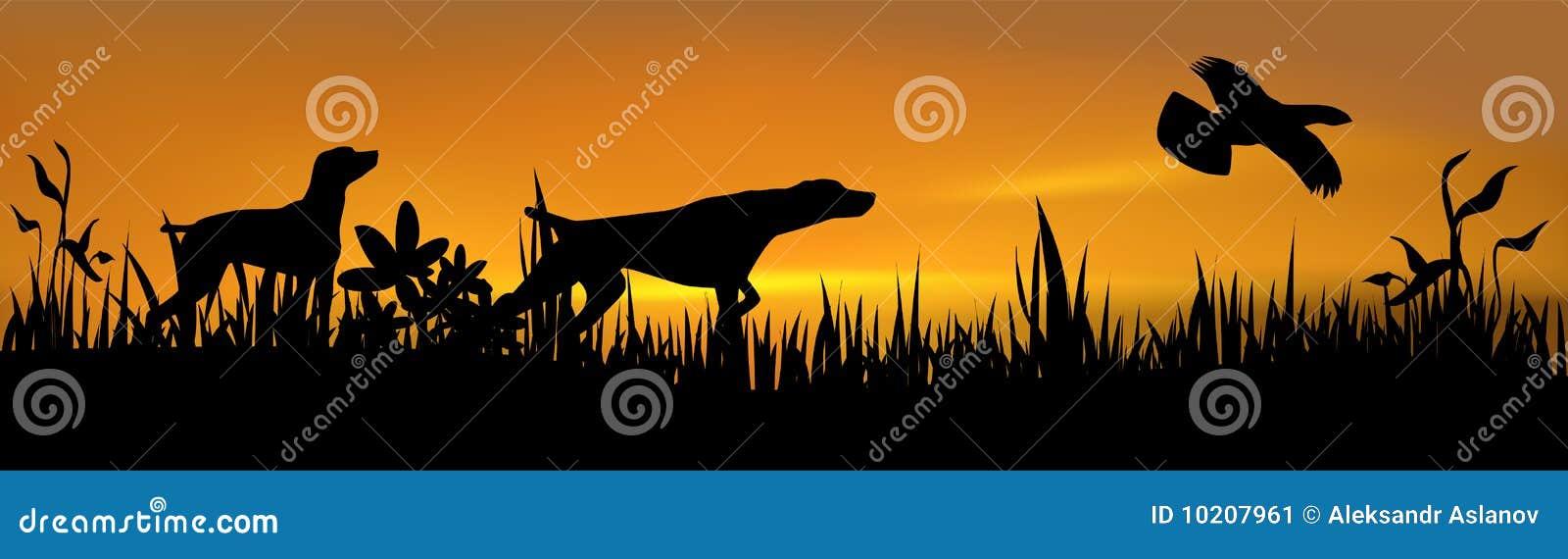 猎鸟犬寻找