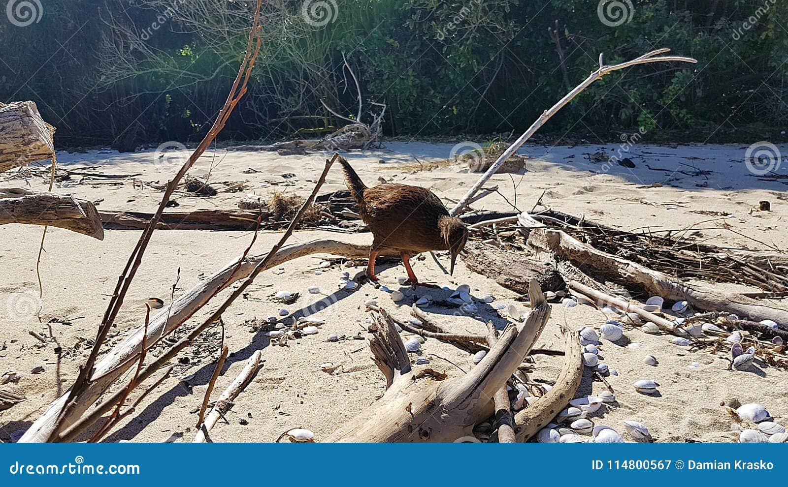 猕猴桃在Roadtrip的新西兰在亚伯塔斯曼国家公园