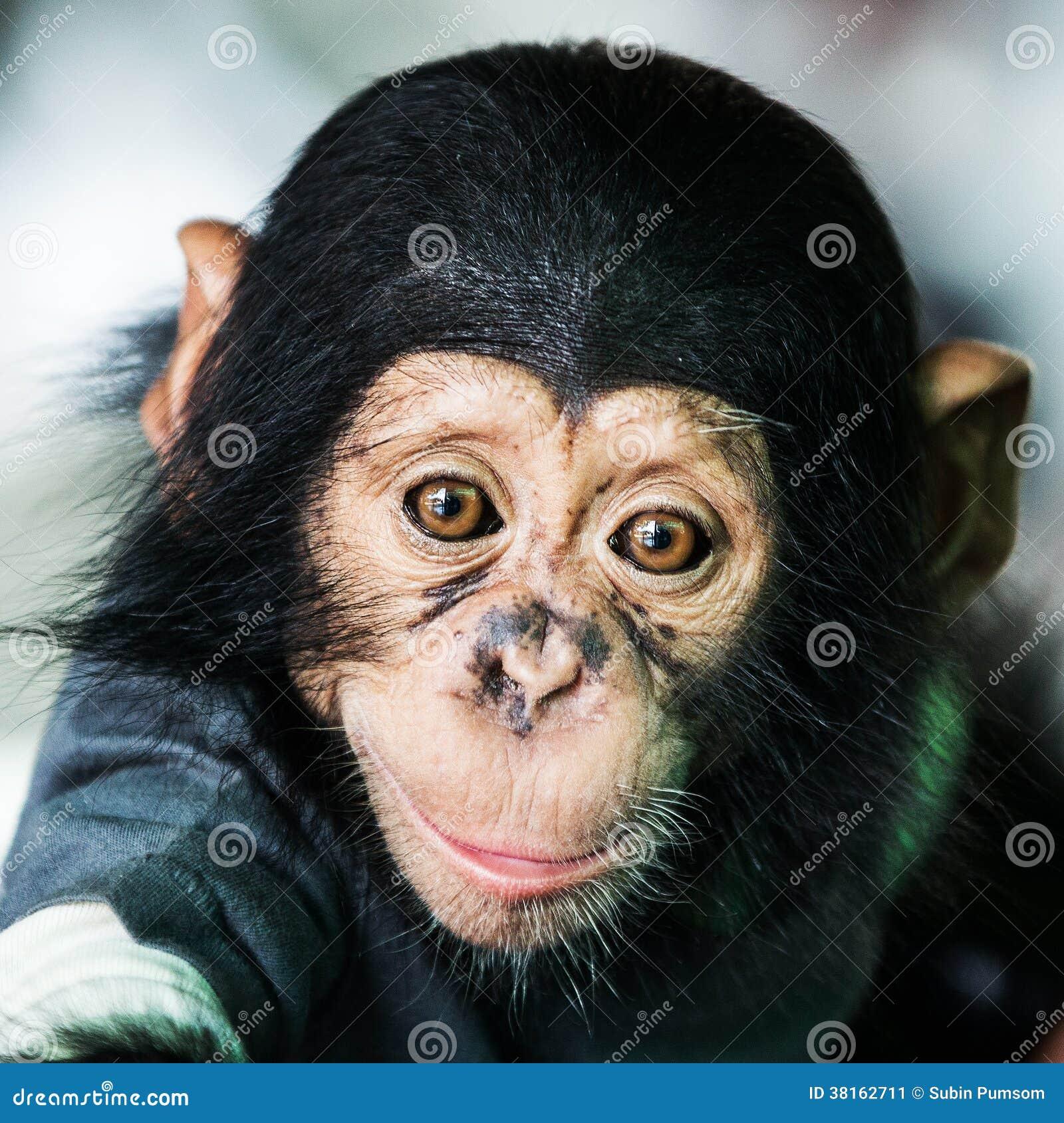 黑猩猩婴孩