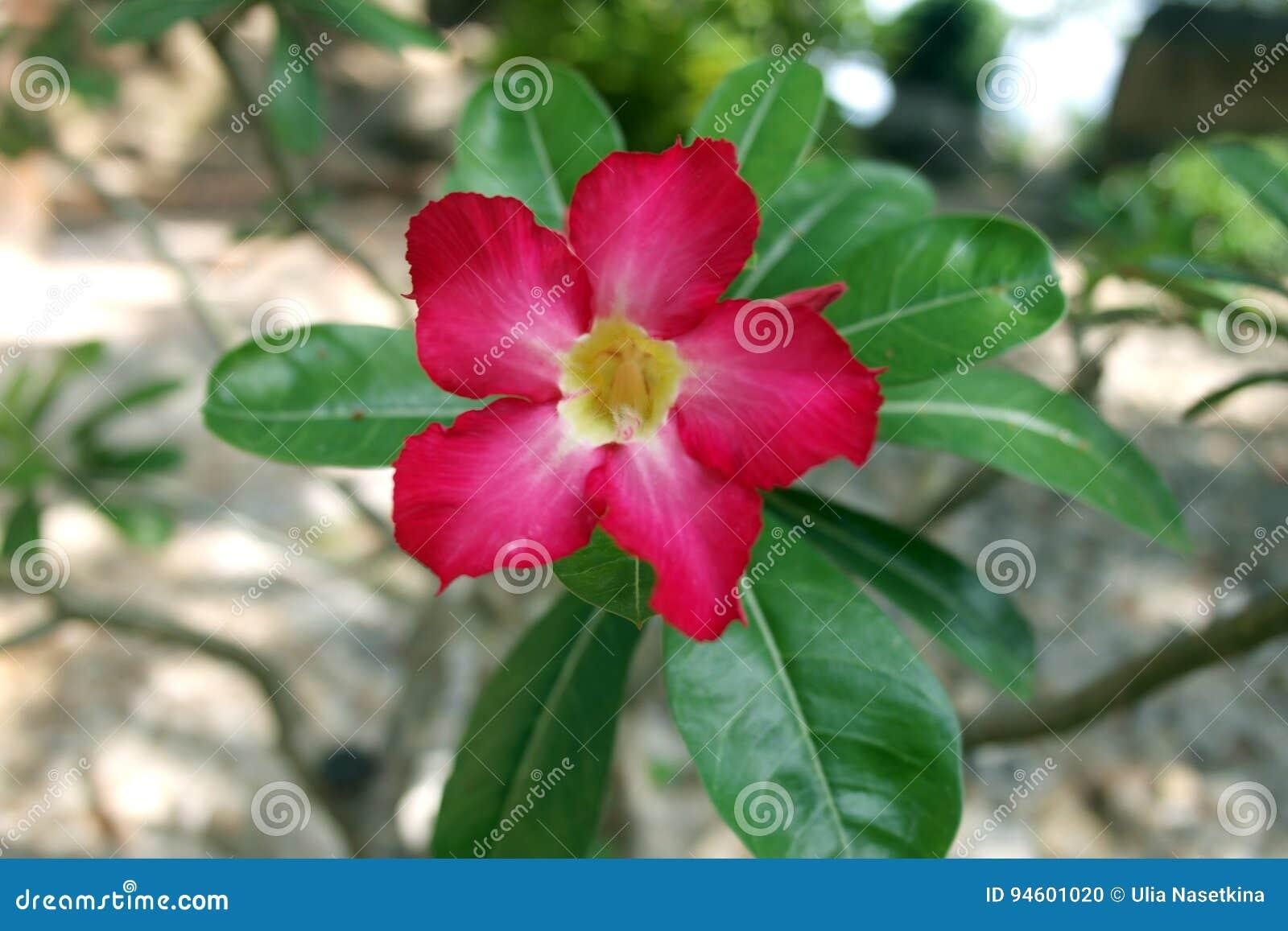 猩红色热带花宏指令射击