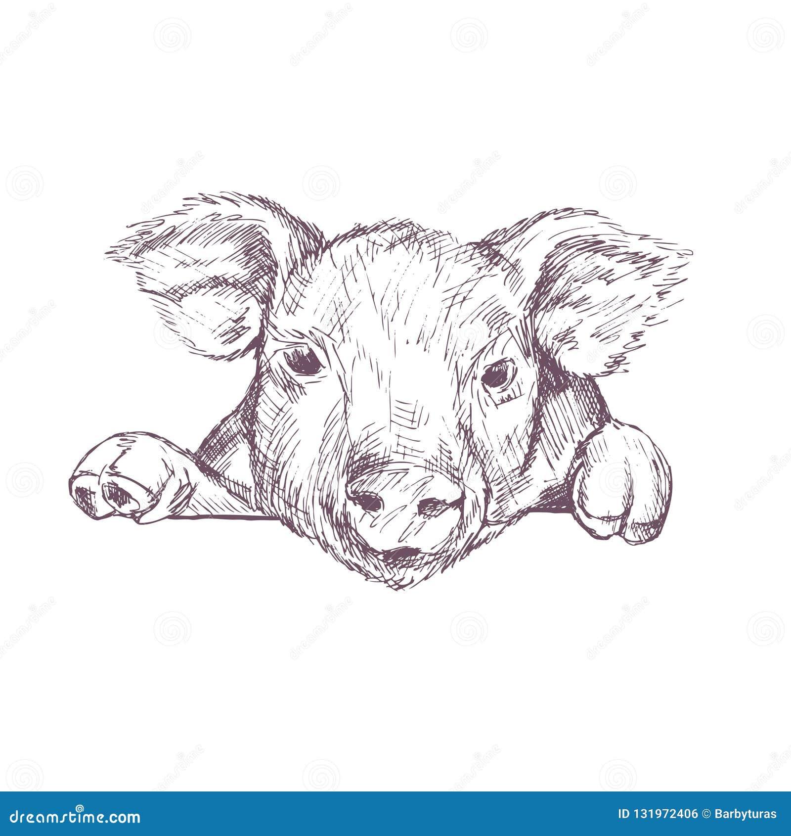 猪 草图 手拉的向量例证