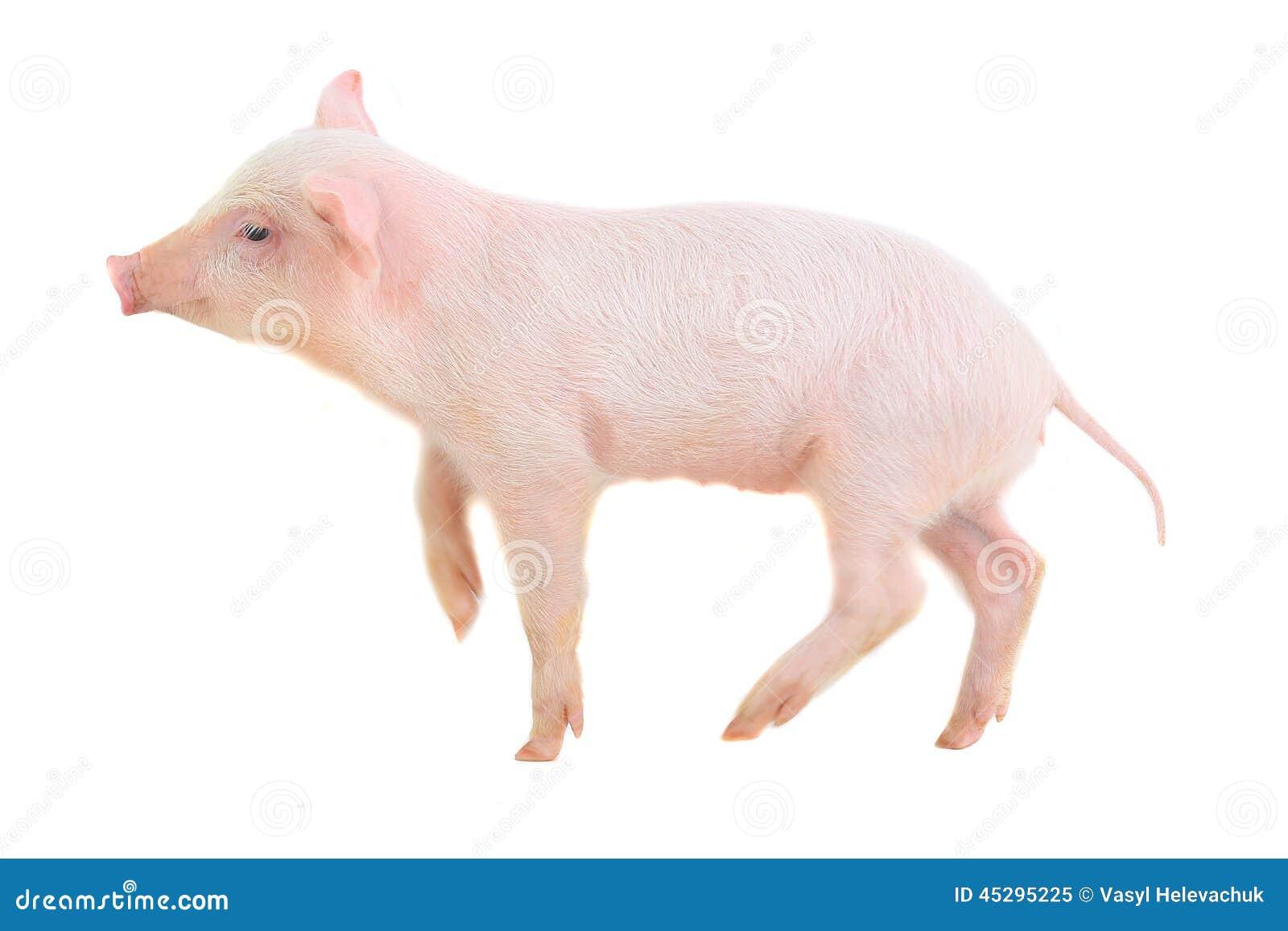 女友猪鼻子整形