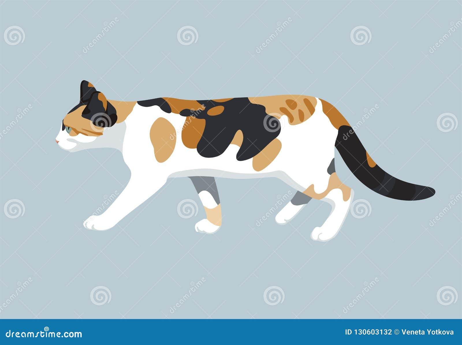猫传染媒介彩色插图全部赌注平的设计