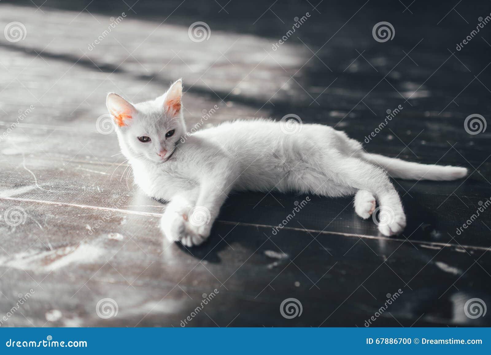 猫全部赌注里面一点软的白色背景