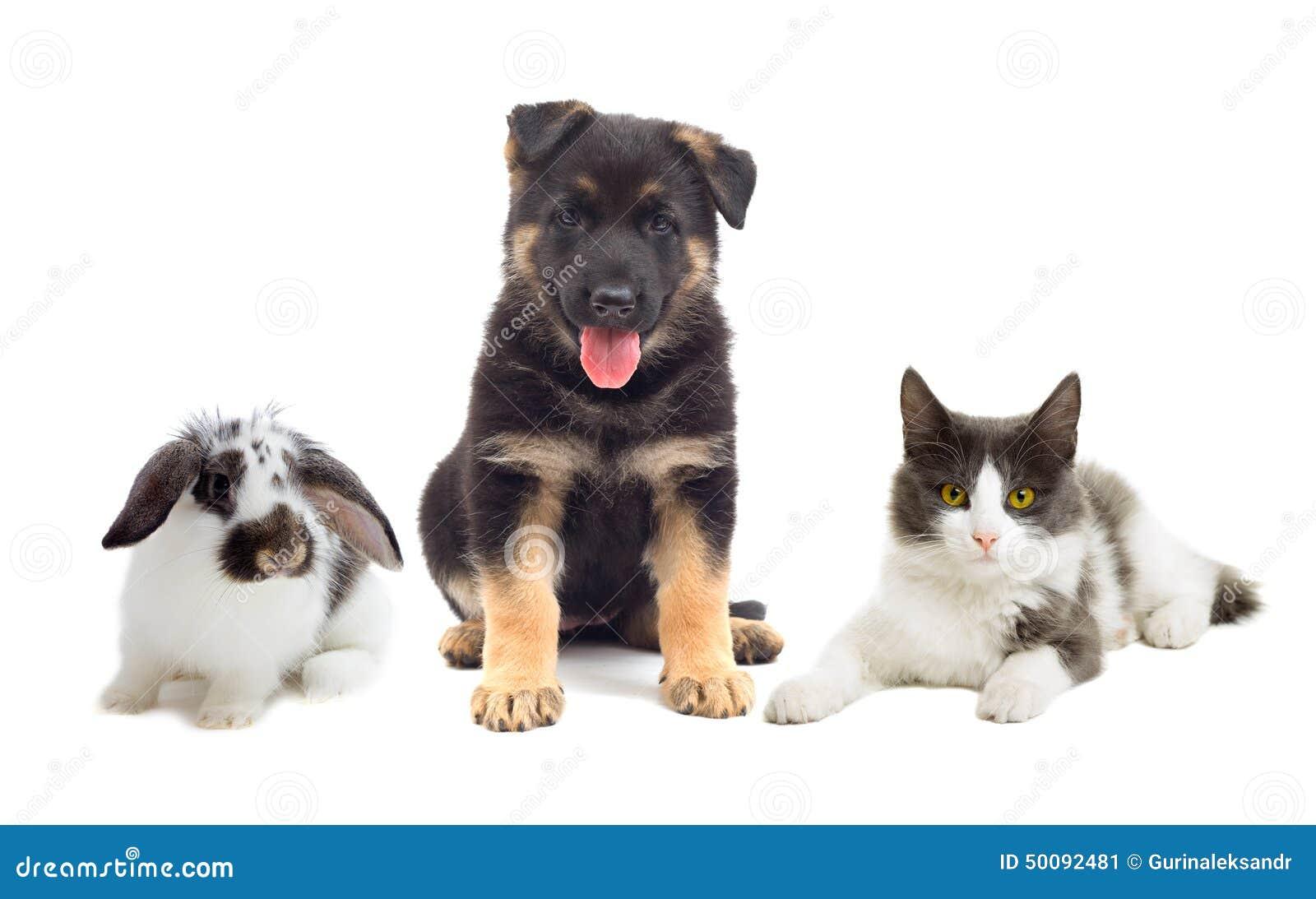 小色狗和猫交配_猫和狗和兔子在被隔绝的白色背景.