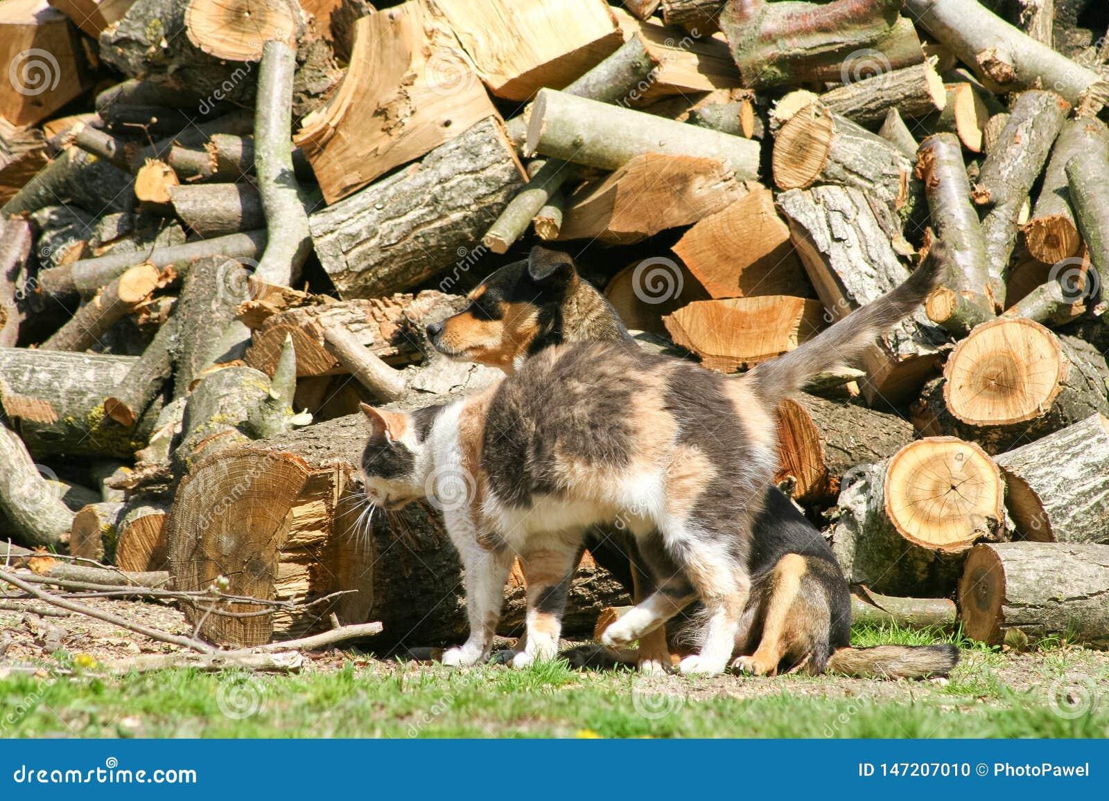 猫和狗爱 动物友谊